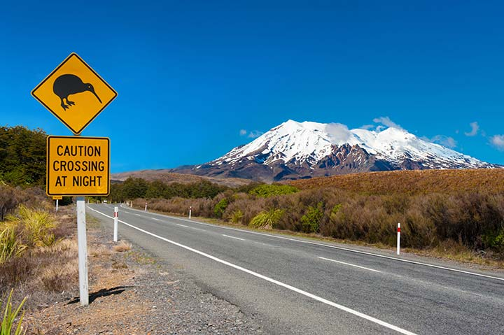Discover the joys of the Mt Ruapehu Ski Season